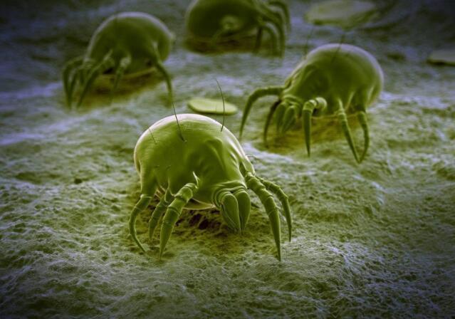 想象不到家中会有很多小虫(虫螨),让家人过敏了怎么办?