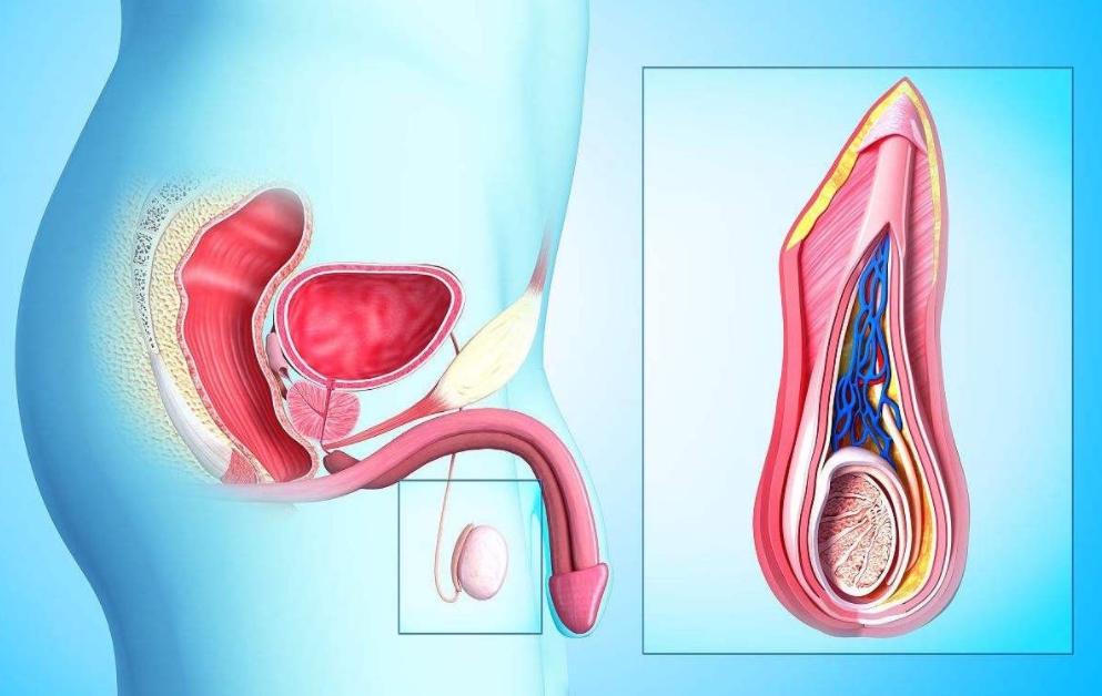 如何预防和治疗前列腺炎?